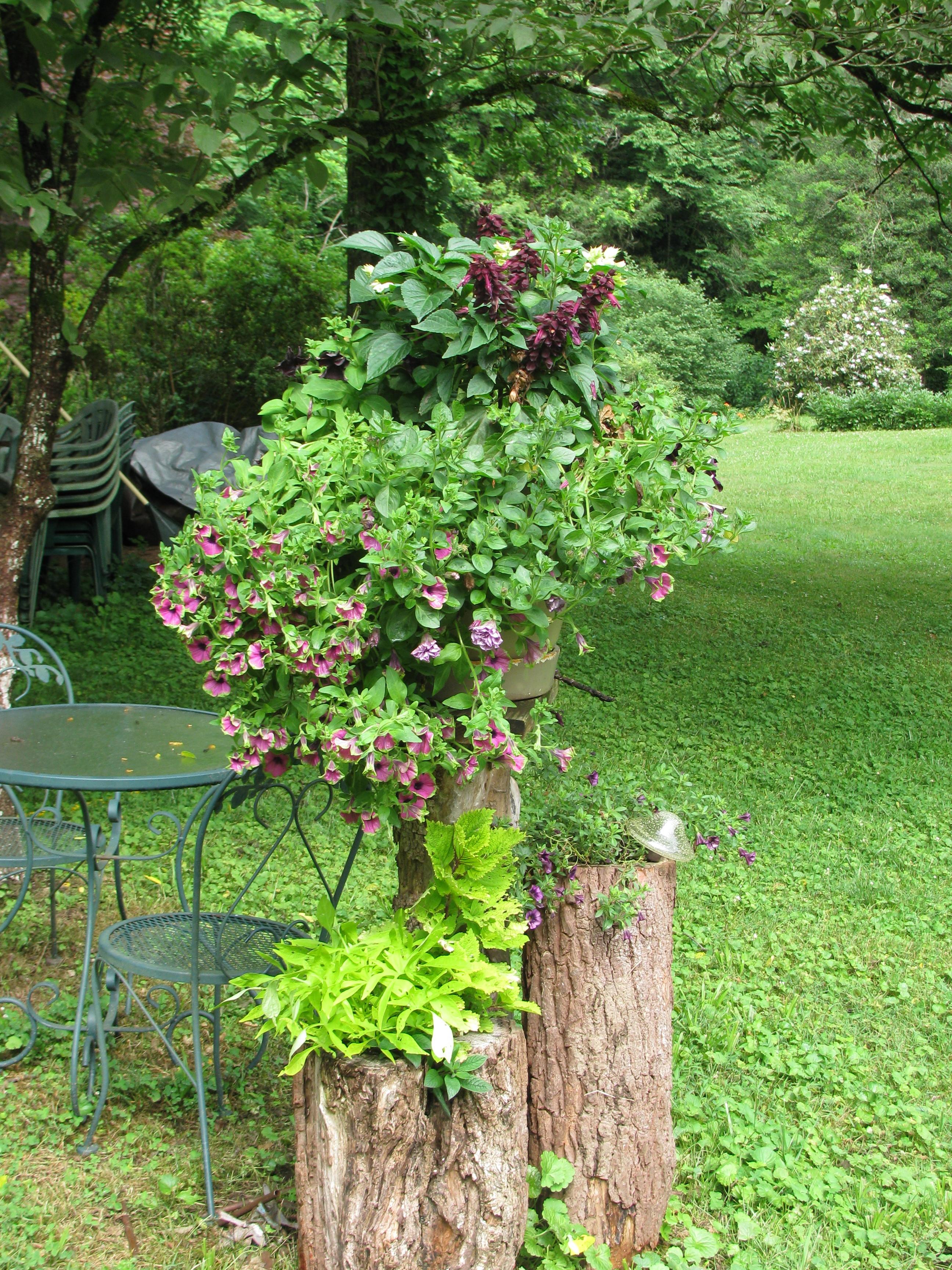 Logs jack spratt 39 s garden - Container gardens for shade ...